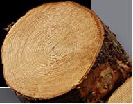 Baumstamm mit Jahresringen